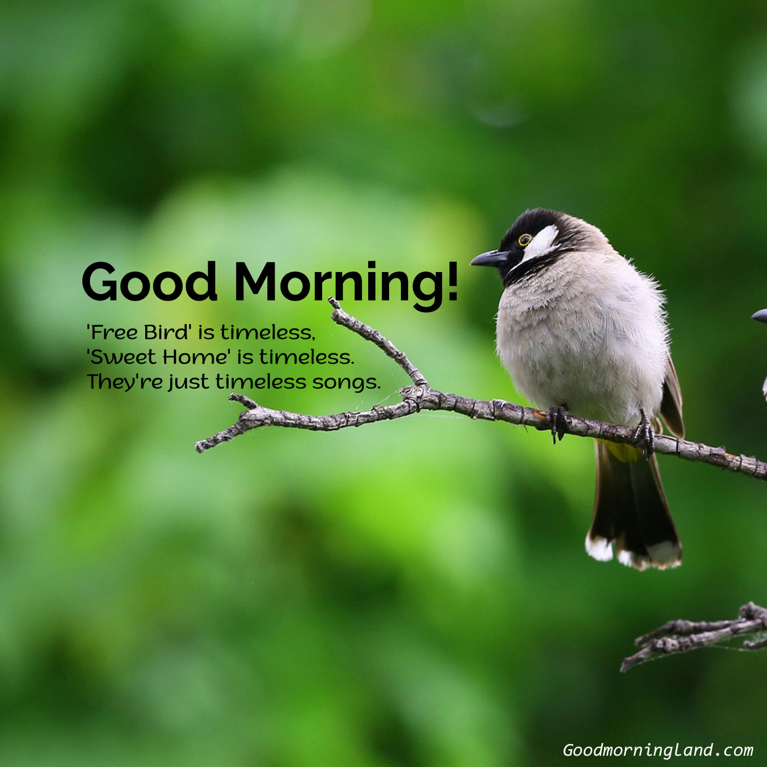 Collection Of Best Good Morning Birds Images For You Good Morning Images Quotes Wishes Messages Greetings Ecards