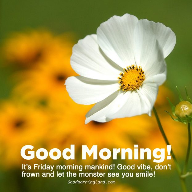 Collection of best Good morning Friday images - Good Morning Images, Quotes, Wishes, Messages, greetings & eCard Images