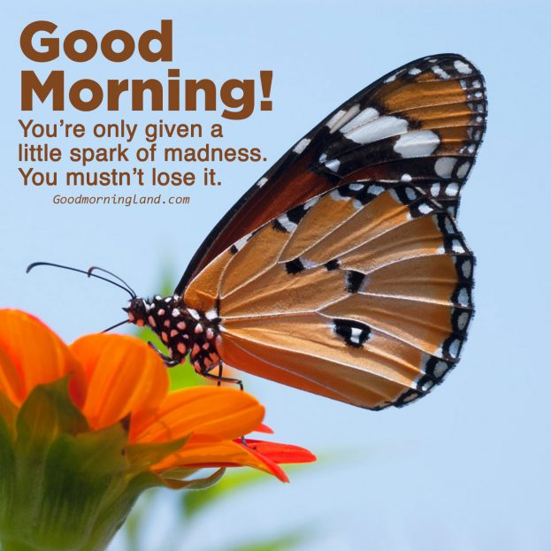 Colorful and Lovely Good morning Friday images - Good Morning Images, Quotes, Wishes, Messages, greetings & eCard Images