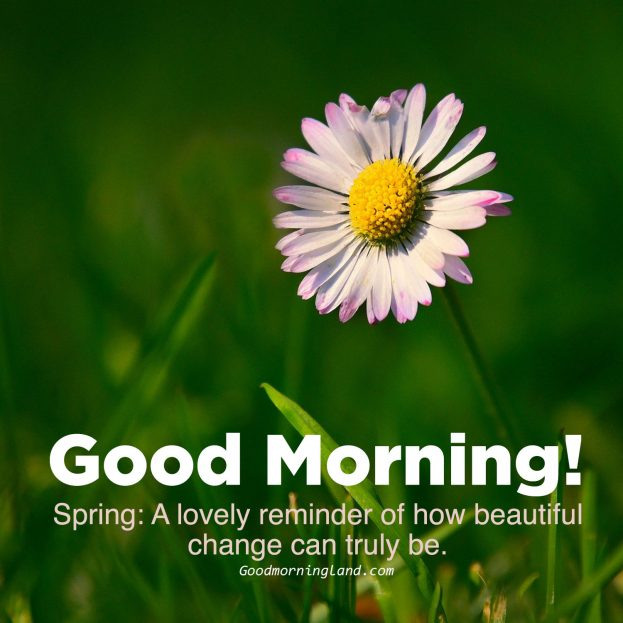Cute Good morning flowers with images - Good Morning Images, Quotes, Wishes, Messages, greetings & eCard Images