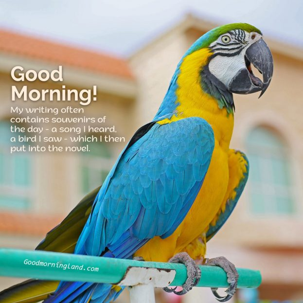 Cute and Lovely Good Morning Birds Images for you - Good Morning Images, Quotes, Wishes, Messages, greetings & eCard Images