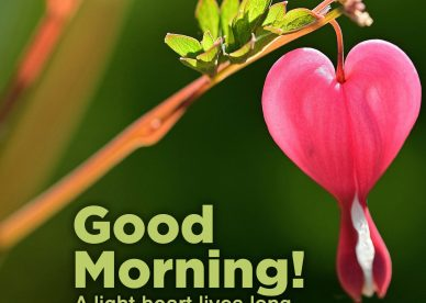 Cute and decent Good Morning Hearts Images - Good Morning Images, Quotes, Wishes, Messages, greetings & eCard Images