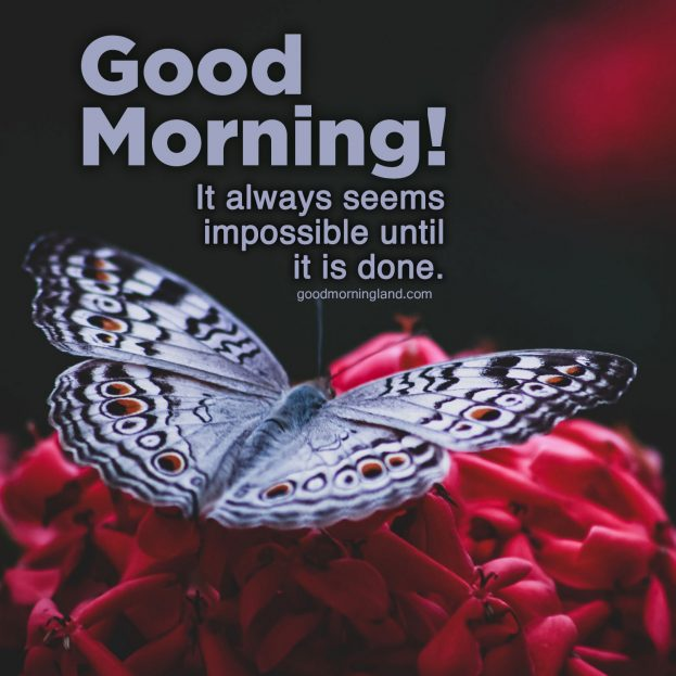 Cute and decent Good Morning message Images 2021 - Good Morning Images, Quotes, Wishes, Messages, greetings & eCard Images