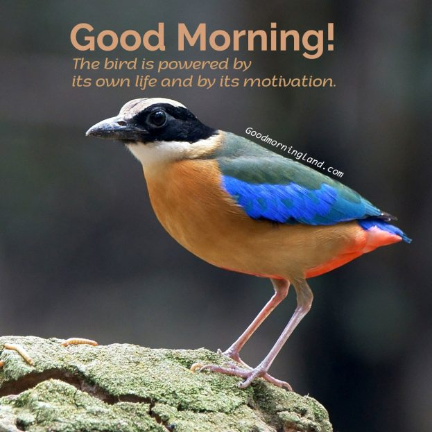Download and share the lovely Good Morning Birds Images - Good Morning Images, Quotes, Wishes, Messages, greetings & eCard Images