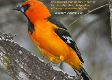 Download beautiful Good Morning Birds Images - Good Morning Images, Quotes, Wishes, Messages, greetings & eCard Images