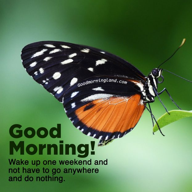Download free and unique Good morning Friday images - Good Morning Images, Quotes, Wishes, Messages, greetings & eCard Images