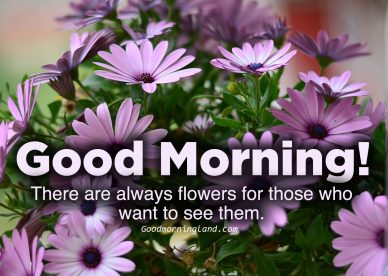 Download image of Good morning flowers with images - Good Morning Images, Quotes, Wishes, Messages, greetings & eCard Images