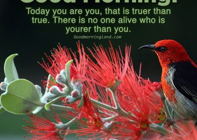 Enjoy beautiful Friday by sharing Good morning Friday images - Good Morning Images, Quotes, Wishes, Messages, greetings & eCard Images