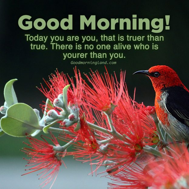 Enjoy beautiful Friday by sharing Good morning Friday images - Good Morning Images, Quotes, Wishes, Messages, greetings & eCard Images