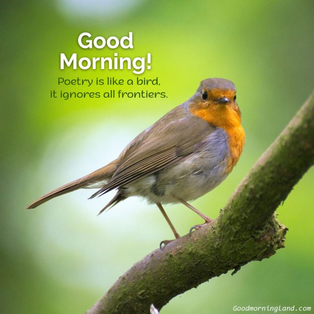 Free and easily shareable Good Morning Birds Images - Good Morning Images, Quotes, Wishes, Messages, greetings & eCard Images