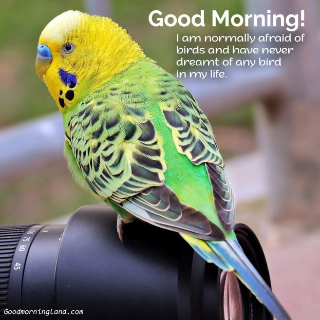 Get the best Good Morning Birds Images for friends and family - Good Morning Images, Quotes, Wishes, Messages, greetings & eCard Images
