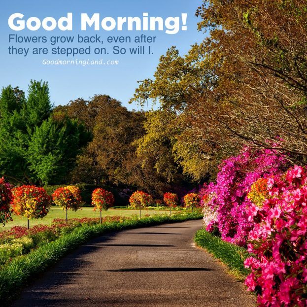 Good Morning natural garden flower images - Good Morning Images, Quotes, Wishes, Messages, greetings & eCard Images