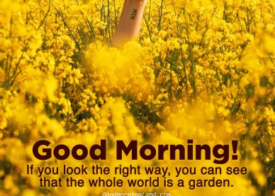 Good morning yellow flower images - Good Morning Images, Quotes, Wishes, Messages, greetings & eCard Images