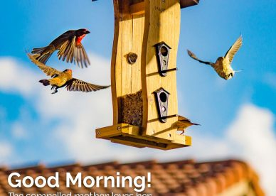 Huge stock of Lovely and Cute Good Morning Birds Images for you - Good Morning Images, Quotes, Wishes, Messages, greetings & eCard Images