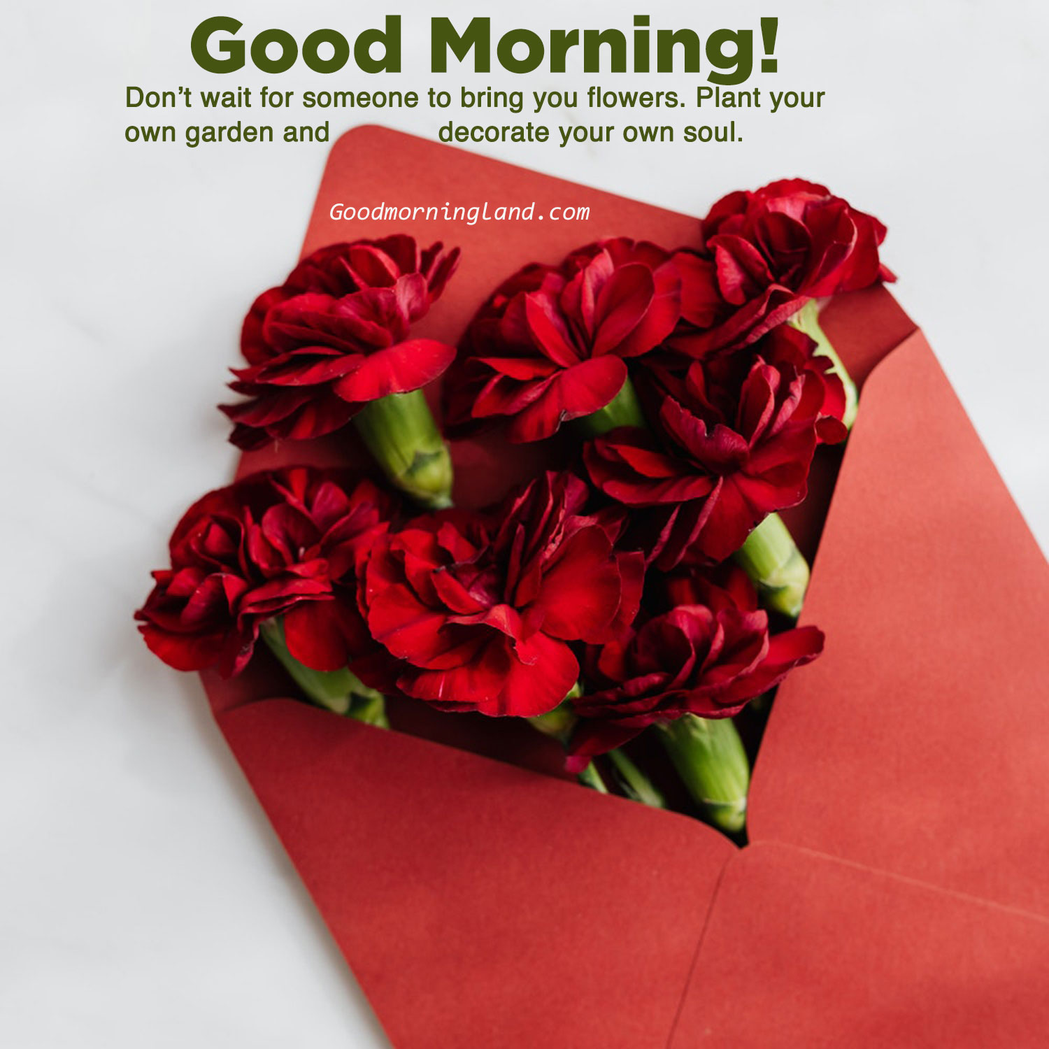 Latest 2020 Good Morning Flowers With Images Good Morning Images Quotes Wishes Messages Greetings Ecards