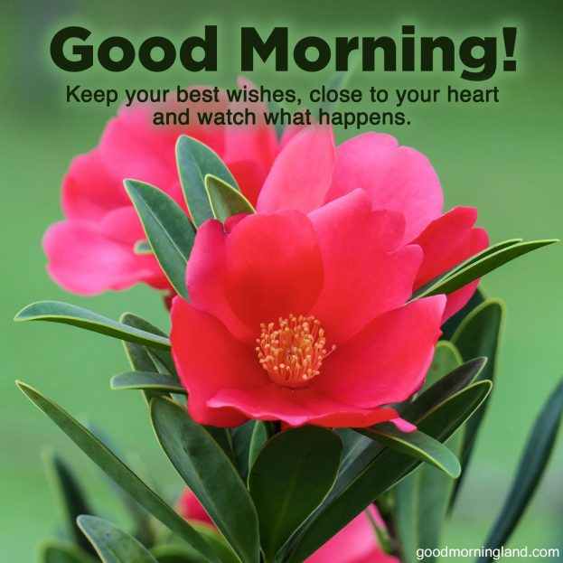 Lovely and Good morning wishes and images - Good Morning Images, Quotes, Wishes, Messages, greetings & eCard Images
