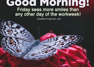 Lovely pictures that say Good morning Friday - Good Morning Images, Quotes, Wishes, Messages, greetings & eCard Images