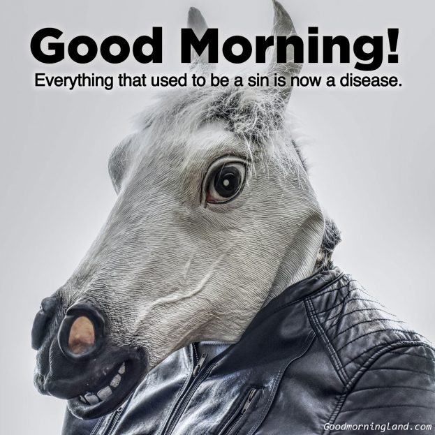 Make your friends and family laugh with Good Morning Funny Images - Good Morning Images, Quotes, Wishes, Messages, greetings & eCard Images