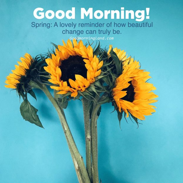Most Downloaded and Good morning flowers with images - Good Morning Images, Quotes, Wishes, Messages, greetings & eCard Images