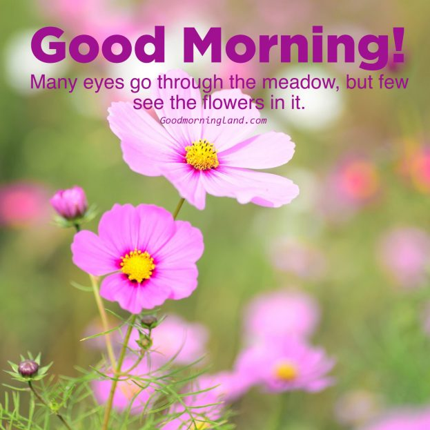 Most liked Good morning flowers with images - Good Morning Images, Quotes, Wishes, Messages, greetings & eCard Images