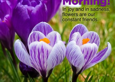 Most searched Good morning flowers with images - Good Morning Images, Quotes, Wishes, Messages, greetings & eCard Images