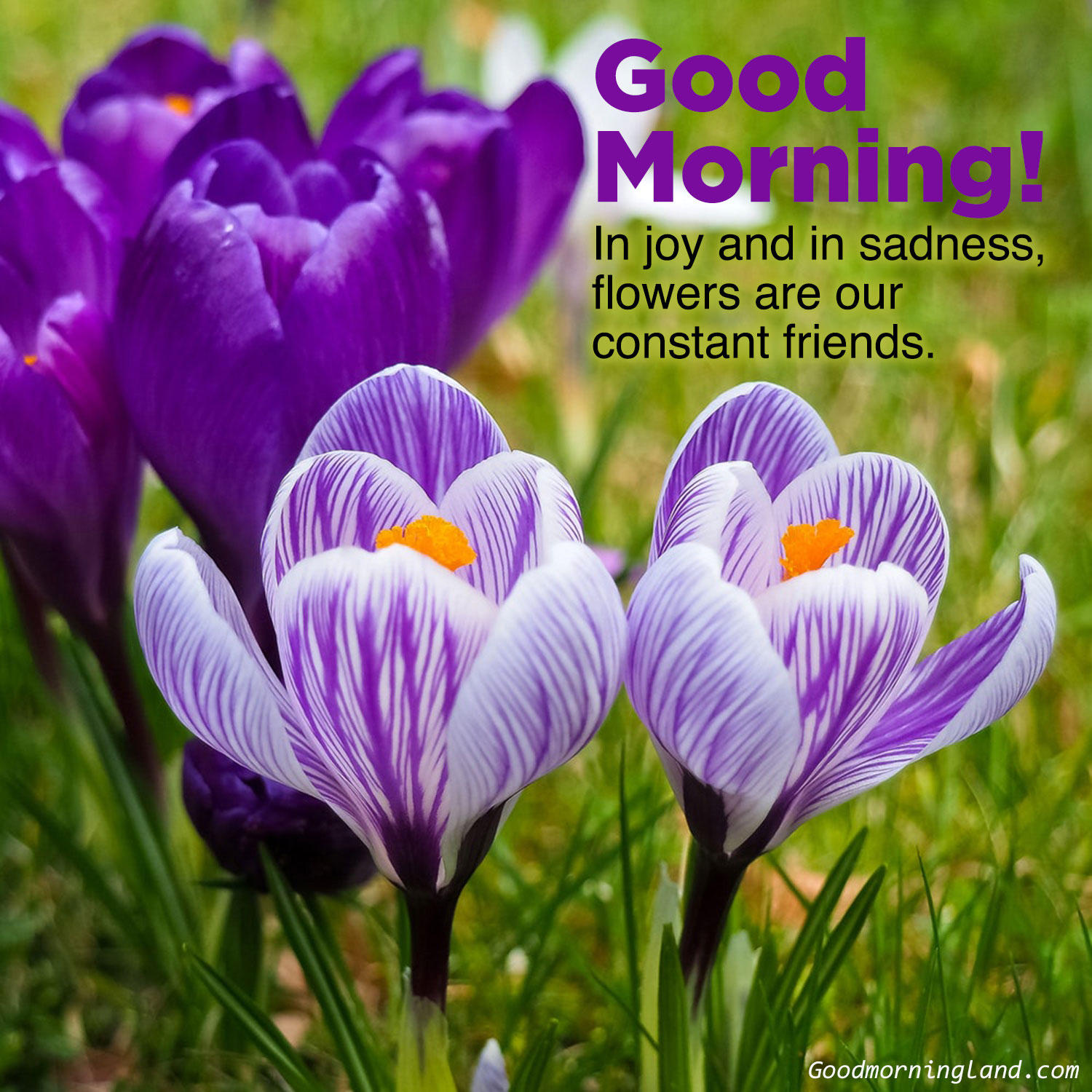 Most Searched Good Morning Flowers With Images Good Morning Images Quotes Wishes Messages Greetings Ecards