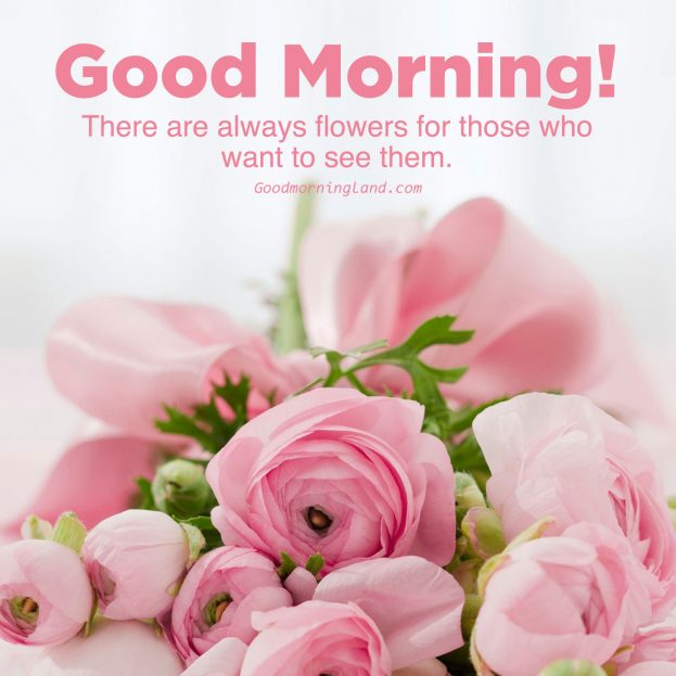 Most shared Good morning flowers with images - Good Morning Images, Quotes, Wishes, Messages, greetings & eCard Images