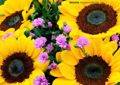 Recent collection of Good morning flowers with images - Good Morning Images, Quotes, Wishes, Messages, greetings & eCard Images