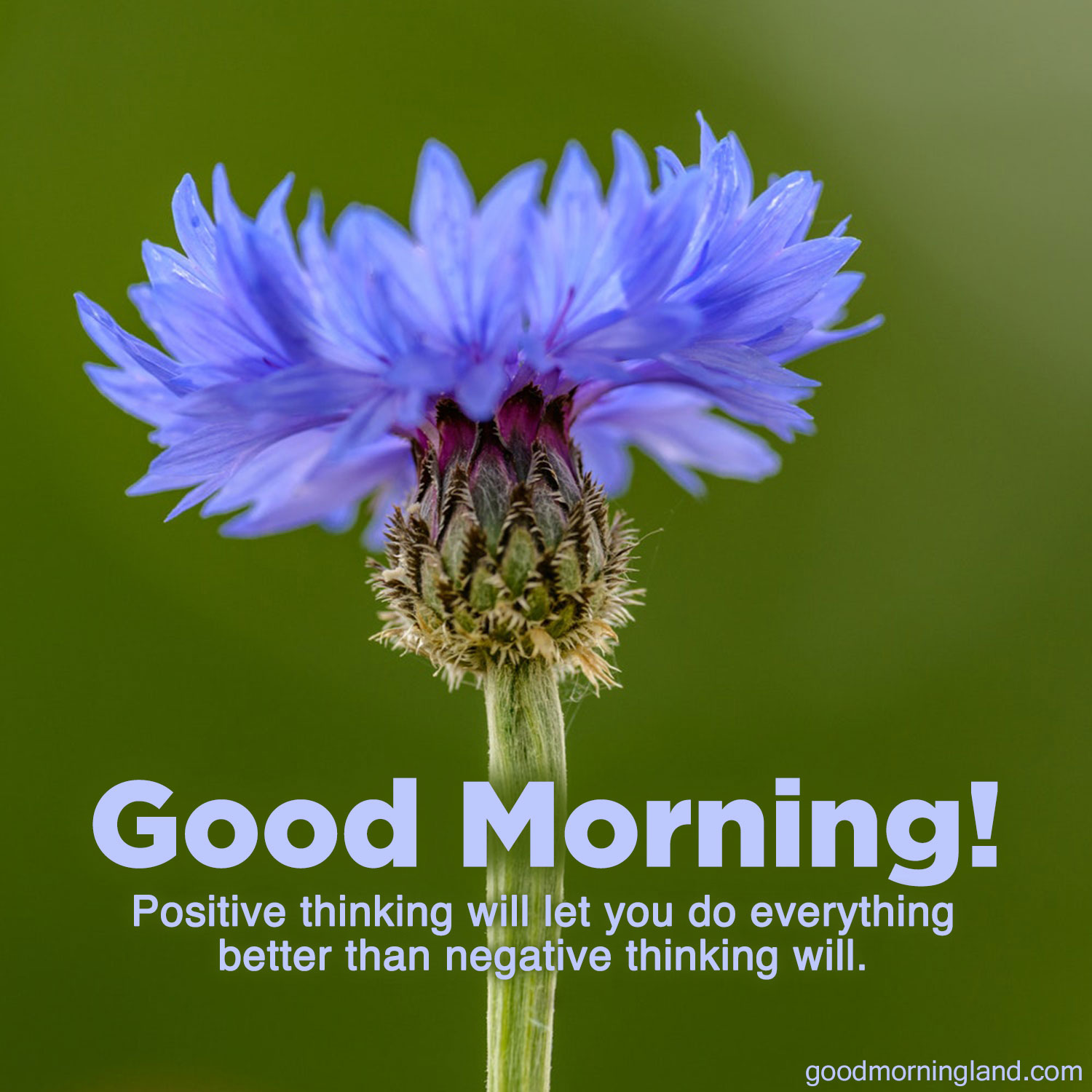 Send Awesome Message With Awesome Good Morning Message Images Good Morning Images Quotes Wishes Messages Greetings Ecards