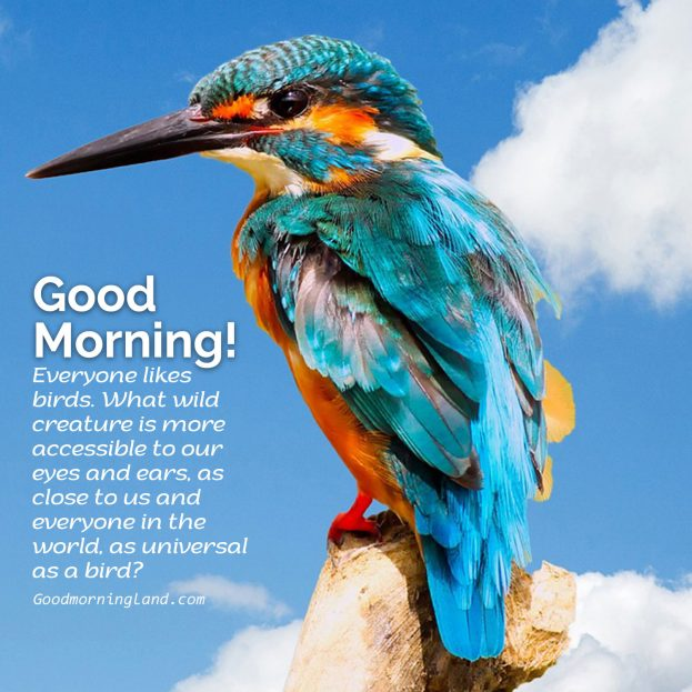 Send your boyfriend Girlfriend the best Good Morning Birds Images - Good Morning Images, Quotes, Wishes, Messages, greetings & eCard Images