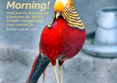 Send your lover adorable Good Morning Birds Images - Good Morning Images, Quotes, Wishes, Messages, greetings & eCard Images