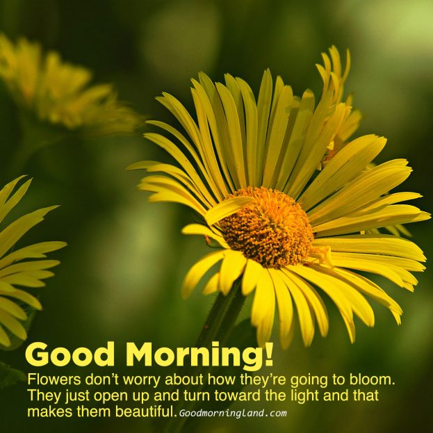 Spread and share Good morning flowers with images - Good Morning Images, Quotes, Wishes, Messages, greetings & eCard Images