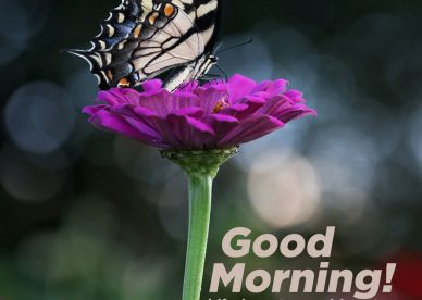 Spread joy and love by sending Good morning Friday images - Good Morning Images, Quotes, Wishes, Messages, greetings & eCard Images