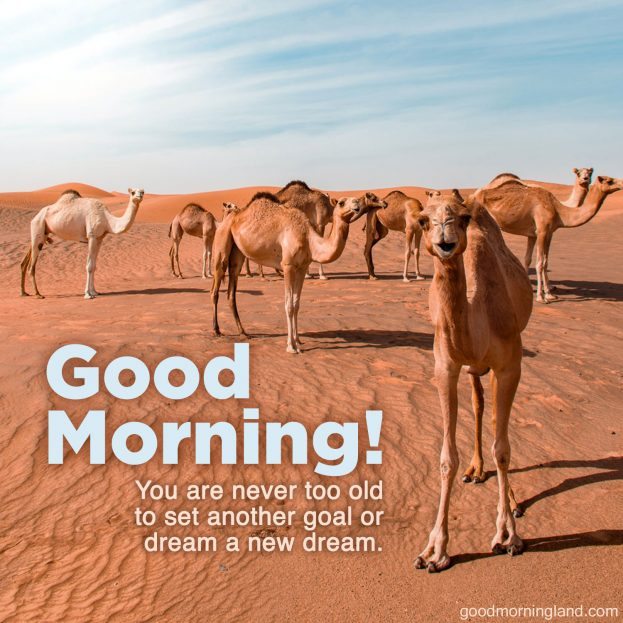 Start your day awesome with Good Morning message Images - Good Morning Images, Quotes, Wishes, Messages, greetings & eCard Images