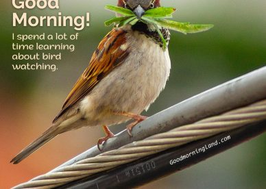 Start your morning by sharing beautiful Good Morning Birds Images - Good Morning Images, Quotes, Wishes, Messages, greetings & eCard Images