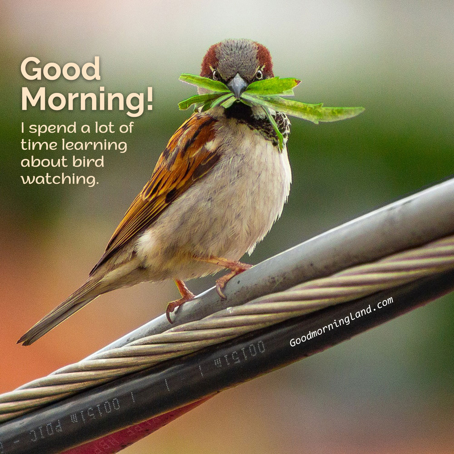 Start Your Morning By Sharing Beautiful Good Morning Birds Images Good Morning Images Quotes Wishes Messages Greetings Ecards