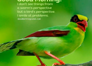 Stunning and free Good Morning Birds Graphics and Images - Good Morning Images, Quotes, Wishes, Messages, greetings & eCard Images