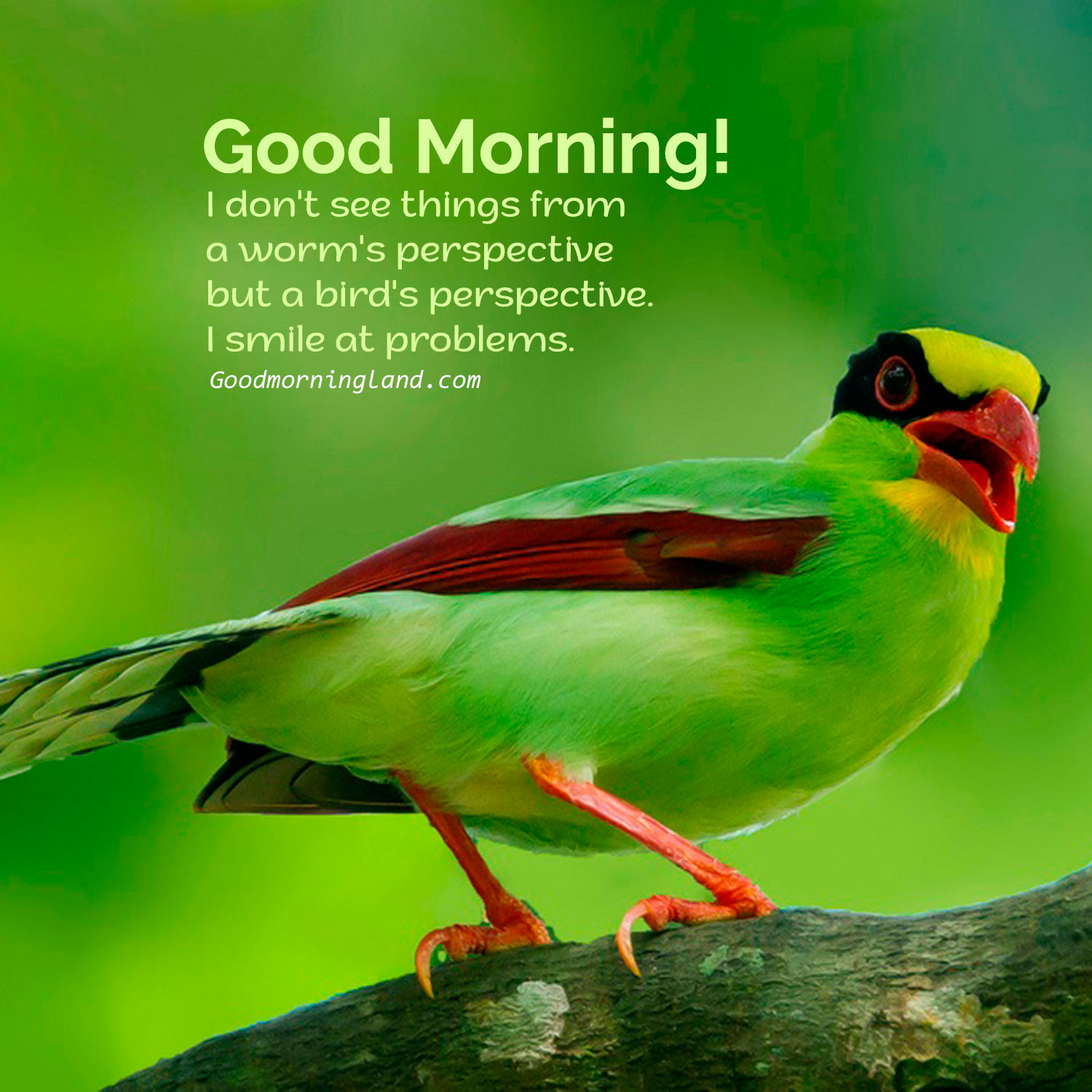 Stunning And Free Good Morning Birds Graphics And Images Good Morning Images Quotes Wishes Messages Greetings Ecards