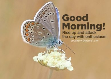 Surprise friends with beautiful Good morning message on Friday - Good Morning Images, Quotes, Wishes, Messages, greetings & eCard Images