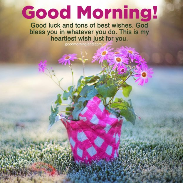 Top Attractive and Good morning wishes and images - Good Morning Images, Quotes, Wishes, Messages, greetings & eCard Images