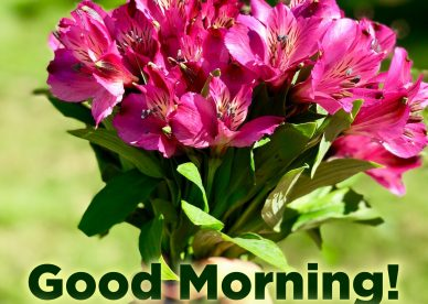Top animated Good morning flowers with images - Good Morning Images, Quotes, Wishes, Messages, greetings & eCard Images