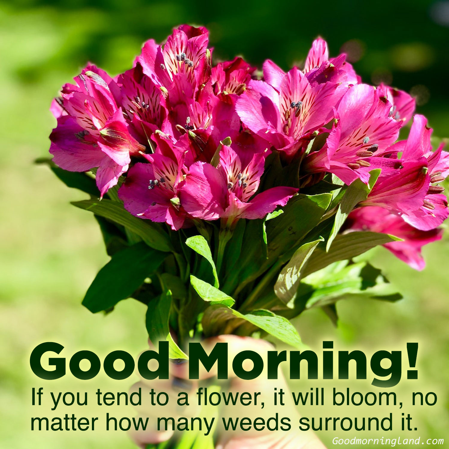 Top Animated Good Morning Flowers With Images Good Morning Images Quotes Wishes Messages Greetings Ecards