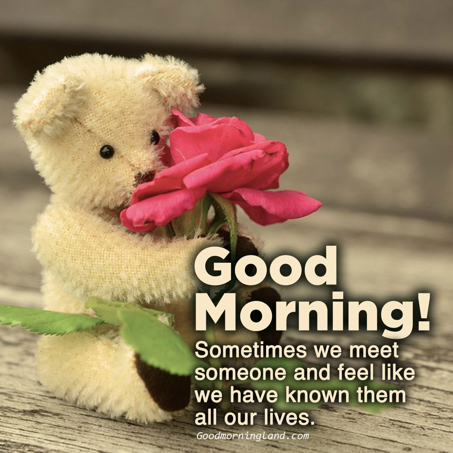 Top animated Good morning love quotes - Good Morning Images