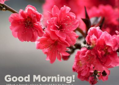 Top ten Good morning flowers with images - Good Morning Images, Quotes, Wishes, Messages, greetings & eCard Images