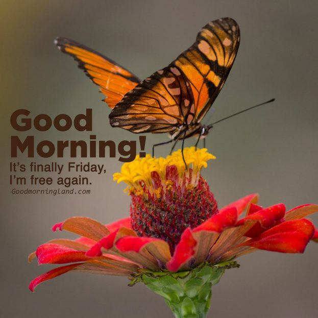 Unique Good morning Friday images with Quotes - Good Morning Images, Quotes, Wishes, Messages, greetings & eCard Images