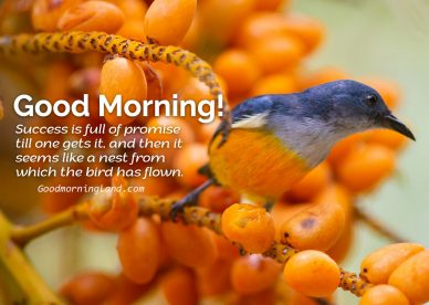 Whatsapp friendly Good Morning Birds Images and Quotes - Good Morning Images, Quotes, Wishes, Messages, greetings & eCard Images
