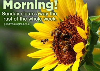Awesome and Good morning Sunday morning images - Good Morning Images, Quotes, Wishes, Messages, greetings & eCard Images.