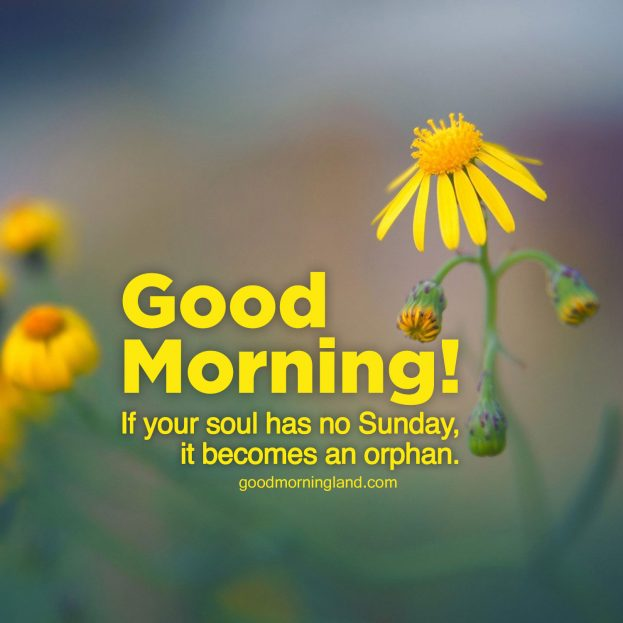 Collection of Good morning Sunday morning images - Good Morning Images, Quotes, Wishes, Messages, greetings & eCard Images.