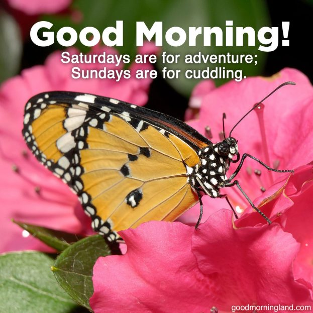 Cute Good morning Sunday morning images 2021 - Good Morning Images, Quotes, Wishes, Messages, greetings & eCard Images.