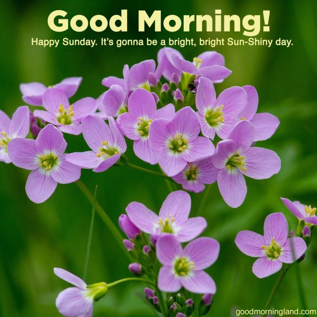 Download image of Good morning Sunday morning sermons - Good Morning Images, Quotes, Wishes, Messages, greetings & eCard Images.